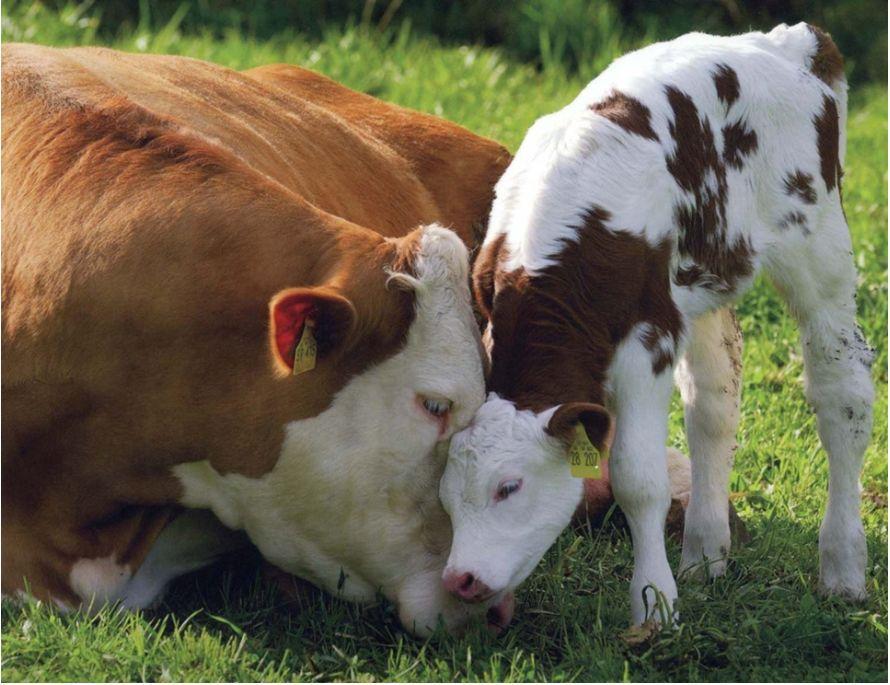 Animal Welfare.Org