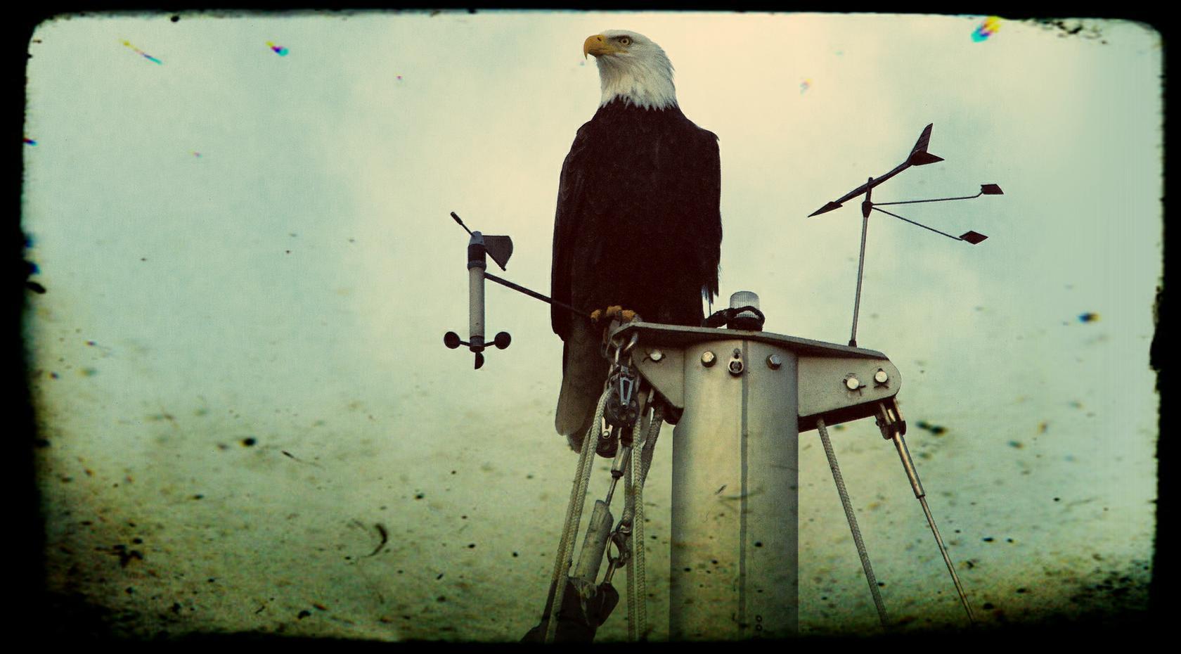 fred eagle